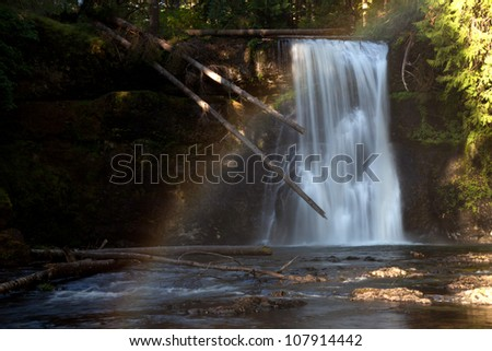 Upper North Waterfall with a fallen tree at Silver Falls Oregon USA America