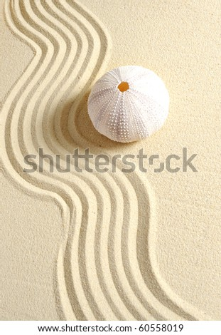 urchin in sand with line - stock photo