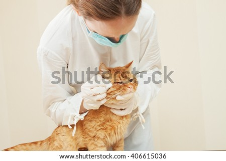 urgent care  in the veterinary clinic - stock photo