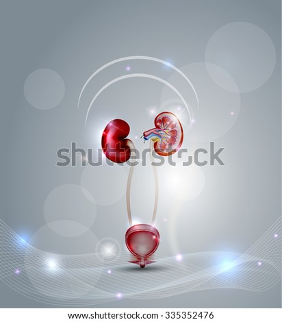 Urinary bladder and kidneys, detailed cross section of the kidney and urinary bladder. Beautiful abstract background with lights. - stock photo