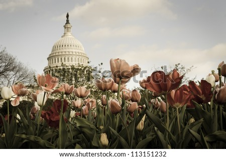 US Capitol Building with tulips foreground - Split toned - stock photo