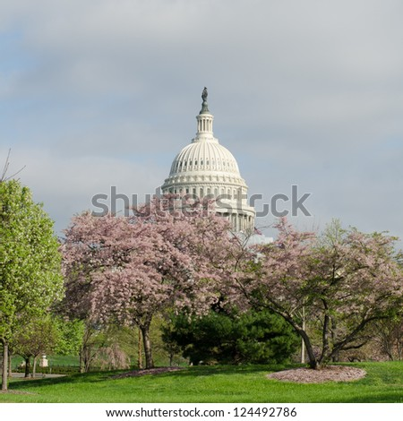 US Capitol Hill in spring among spring blossoms - Washington DC, United States - stock photo
