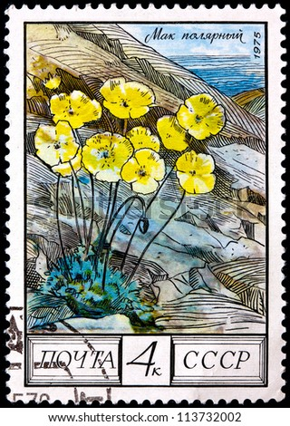 "USSR - CIRCA 1975: A Postage Stamp Shows Image of a Arctic Poppy with the Designation ""Papaver Radicatum"", circa 1975"