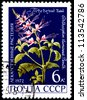 USSR - CIRCA 1972: A Postage Stamp Shows Orthosiphon Stamineus, circa 1972 - stock photo