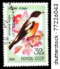 USSR - CIRCA 1981: A stamp printed in Russia shows animal songbird, circa 1981 - stock photo