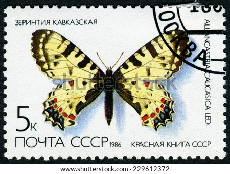 "USSR - CIRCA 1986: A stamp printed in the USSR (Russia) shows a Butterfly with the inscription ""Allancastria Caucasica"", from the series ""Red Book USSR"", circa 1986 - stock photo"