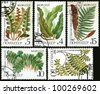 USSR - CIRCA 1987: A stamp printed in the USSR shows a Ceterach, Hart's tongue fern, Ostrich fern, Maidenhair, Floating Salbiniya, circa 1987. - stock photo