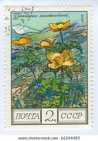 USSR - CIRCA 1976: A stamp printed in the USSR shows flower, circa 1976