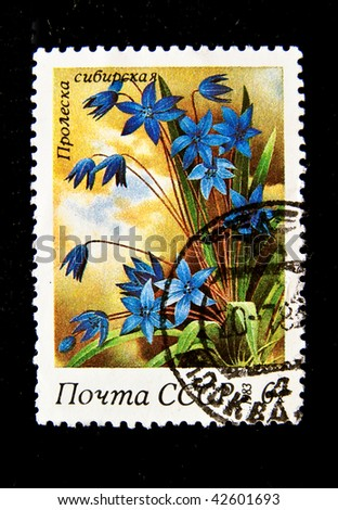 "USSR - CIRCA 1983: A stamp printed in the USSR shows flower Siberian bluebell, circa 1983. ""Flora of Russia"" series"