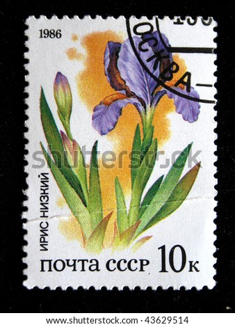 USSR - CIRCA 1986: A stamp printed in the USSR shows Iris, circa 1986