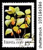 "USSR - CIRCA 1982: A stamp printed in USSR (Russia) shows a Wild berries with the inscription ""Cherries"", from the series ""Wild berries"", circa 1982 - stock photo"