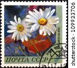 "USSR - CIRCA 1970: A stamp printed in USSR (Russia) shows Flowers with the inscription ""Chamomile&quo t;, from the series ""Flowers"" , circa 1970 - stock photo"