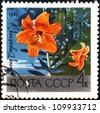 "USSR - CIRCA 1969: A stamp printed in USSR (Russia) shows red lily with the inscription ""Slender (Rus. Stroynaya)"" from the series ""Academy of Sciences Botanical Gardens, Moscow"", circa 1969 - stock photo"