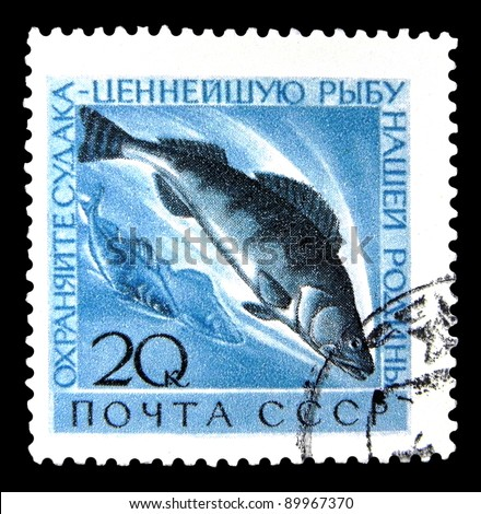 """USSR - CIRCA 1960: A stamp printed in USSR (Russia) shows Walleye with the inscription """"Protect the most valuable fish of our homeland"""" from the series """"Protecting valuable fish species"""", circa 1960 - stock photo"""