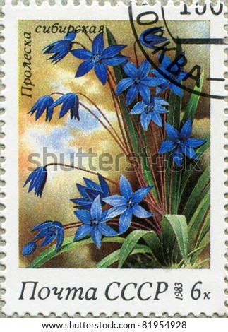 USSR - CIRCA 1983: A stamp printed in USSR, series flowers, circa 1983