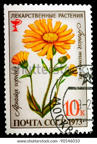 USSR - CIRCA 1973: A stamp printed in USSR shows a Arnica montana, herb series, circa 1973