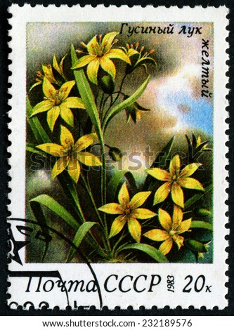 USSR - CIRCA 1983: A stamp printed in USSR, shows a Goose yellow onion, from the series Spring Flowers, circa 1983 - stock photo
