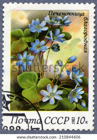 USSR - CIRCA 1983: A stamp printed in USSR, shows a hepatica noble, from the series Spring Flowers, circa 1983  - stock photo