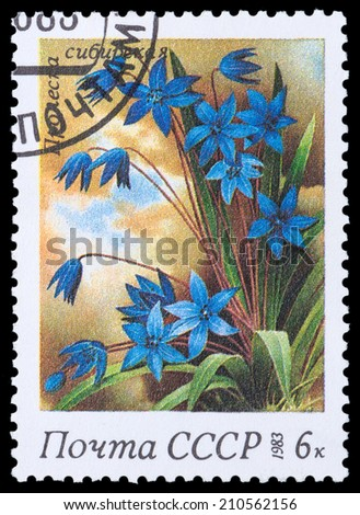 USSR - CIRCA 1983: A stamp printed in USSR,  shows a Siberian squills, from the series Spring Flowers, circa 1983 - stock photo