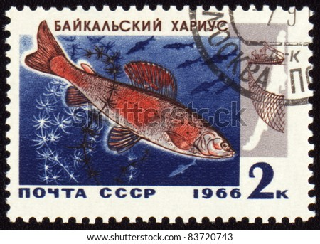 "USSR - CIRCA 1966: A stamp printed in USSR shows Baikal grayling, series ""Commercial fish of Lake Baikal"", circa 1966 - stock photo"