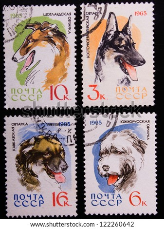 USSR - CIRCA 1965: A stamp printed in USSR shows dogs of different kinds, circa 1965. - stock photo