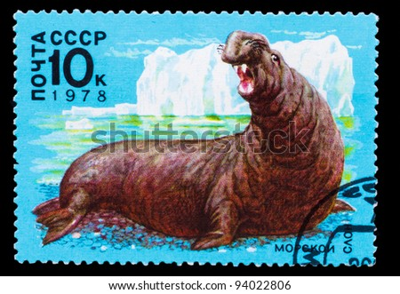 USSR - CIRCA 1978: A Stamp printed in USSR, shows image sea elephant , circa 1978