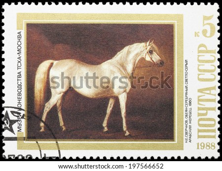 USSR - CIRCA 1988: A stamp printed in USSR, shows Light Gray Arabian Stallion, by N.E. Sverchkov, 1860, series Moscow Museum of Horse Breeding, circa 1988 - stock photo