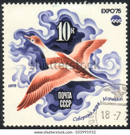 "USSR - CIRCA 1975: A stamp printed in USSR  shows Long-tailed Duck , from series ""EXPO75"", circa 1975"