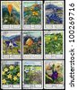 "USSR - CIRCA 1976: A stamp printed in USSR, shows series of ""Flowers of the mountains of Caucasus"", circa 1976. - stock photo"