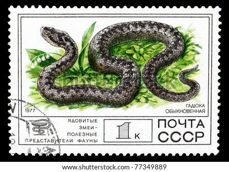 "USSR - CIRCA 1977: A Stamp printed in USSR shows the image of a Common European Adder from the series ""Venomous snakes, useful for medicinal purposes"", circa 1977 - stock photo"