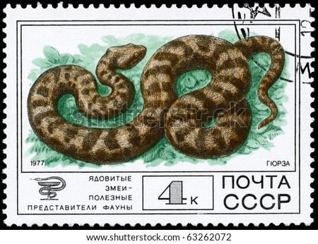 "USSR - CIRCA 1977: A Stamp printed in USSR shows the image of a Lebetina Viper from the series ""Venomous snakes, useful for medicinal purposes"", circa 1977 - stock photo"