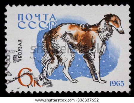 "USSR - CIRCA 1965: Postage stamp ""Greyhound"" (breeds of dogs) - stock photo"