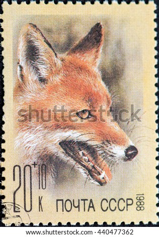 USSR - CIRCA 1988: Postage stamp of the USSR with the image of the fox. A series of postage stamps help Fund zoos 1988. - stock photo