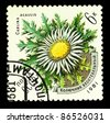 USSR - CIRCA 1981: stamp printed by USSR, shows Carlina Acaulis, circa 1981 - stock photo