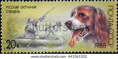 USSR - CIRCA 1988: The postal stamp printed in USSR - Russian Spaniel, series Hunting dogs, circa 1988 - stock photo
