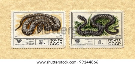 "USSR - CIRCA 1977: The postal stamp printed in USSR shows series ""Venomous snakes, useful for medicinal purposes"", circa 1977 - stock photo"