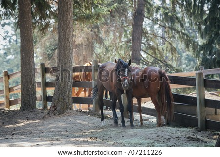 UTAH, USA - AUGUST 20 2017: Two brown horses are standing outside of the stable