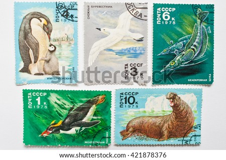 UZHGOROD, UKRAINE - CIRCA MAY, 2016: Collection of postage stamps printed in USSR shows animals from Antarctica, circa 1978 - stock photo