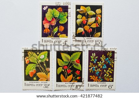UZHGOROD, UKRAINE - CIRCA MAY, 2016: Collection of postage stamps printed in USSR, shows forest berries series, circa 1982 - stock photo