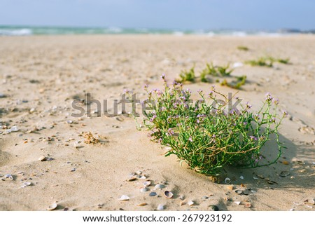 Vacation by the sea. Sandy coast and bush flowers. The best way to relax is to go to the sea. - stock photo