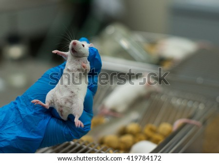 Vaccine test on laboratory mouse Lab rats - stock photo