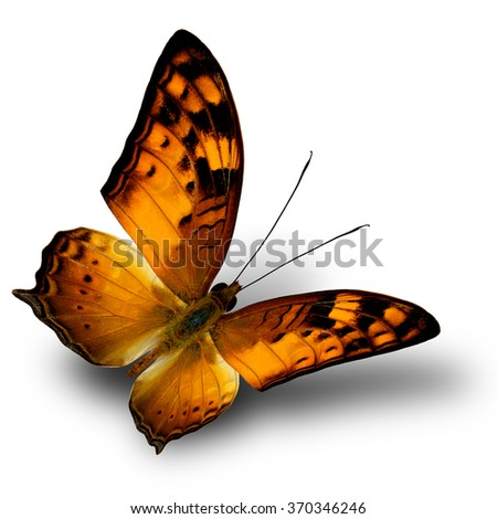 Vagrant butterfly (Vagrans egista) the beautiful flying orange and brown butterfly in natural color on white background with shade beneath - stock photo