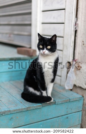 Vagrant cat - stock photo
