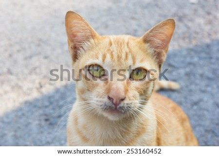 Vagrant cat on the street. - stock photo