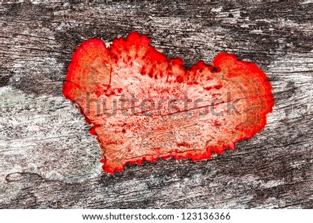 valentine background close up of an old rough wood background texture with red heart shaped mildew - stock photo