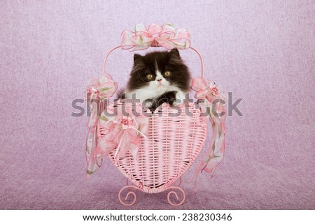 Valentine black and white Persian kitten sitting inside pink heart shape basket on pink background  - stock photo
