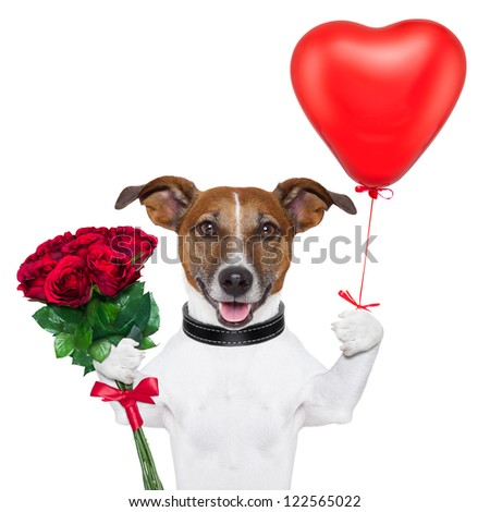 valentine dog  with a bunch of  red  roses and a red balloon - stock photo