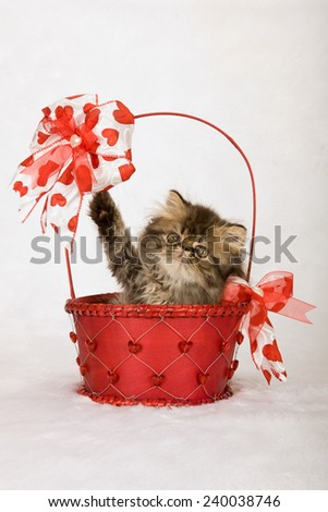 Valentine Persian kitten sitting inside red decorated Valentine basket on white fake faux fur background  - stock photo