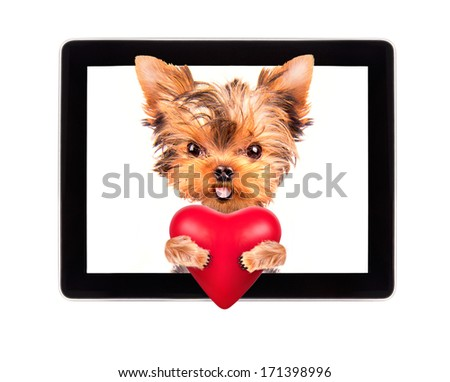 valentine puppy dog holding heart with tablet ?omputer - stock photo