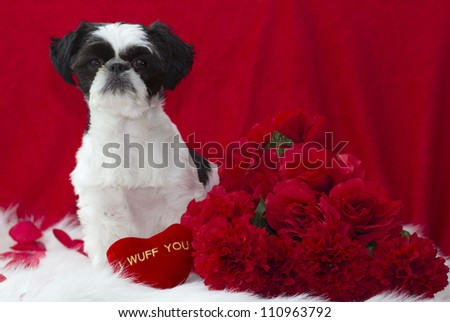 Valentine puppy with red roses.